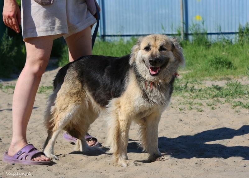 """Собаки приюта """"Лучший друг""""  бездомные животные, животные, месте мы можем помочь, помощь животным, приют, приют тюмени, тюмень"""