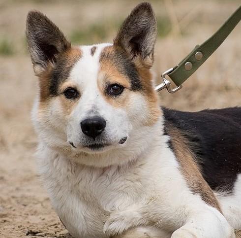 """Вместе мы можем помочь: Тюменский приют для животных """"Лучший Друг"""" бездомные животные, животные, месте мы можем помочь, помощь животным, приют, приют тюмени, тюмень"""