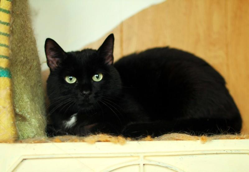 """Кошки приюта """"Лучший друг""""  бездомные животные, животные, месте мы можем помочь, помощь животным, приют, приют тюмени, тюмень"""