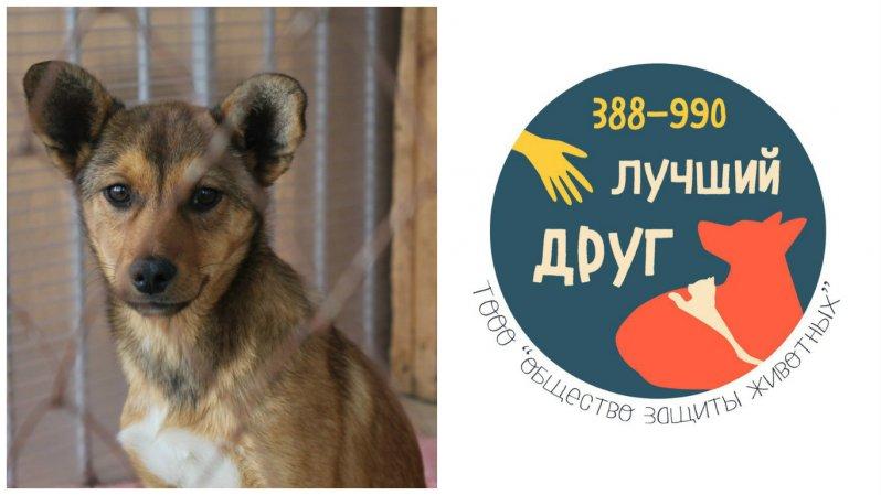 История приюта бездомные животные, животные, месте мы можем помочь, помощь животным, приют, приют тюмени, тюмень