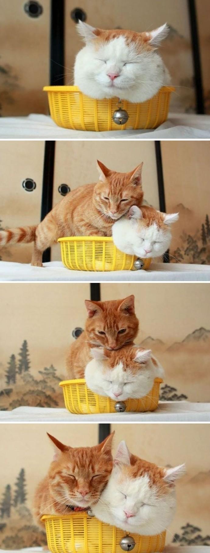 Коты, которые обожают маленькие пространства животные, коты, фото., юмор