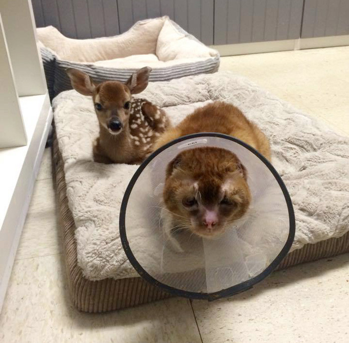 """""""Не знаю, способен ли он чувствовать боль других, но он способен найти общий язык с каждым пациентом"""" животное, забота, кот, спасение"""