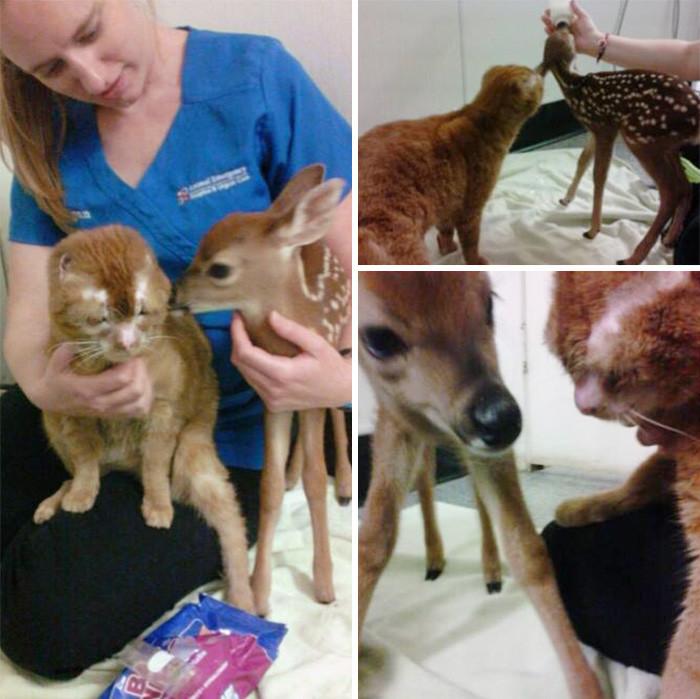 Оставшись жить в больнице, кот стал ухаживать за животными  животное, забота, кот, спасение