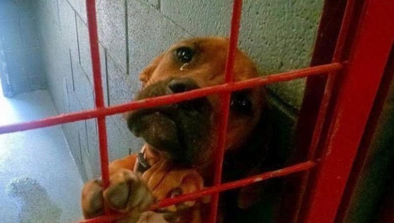 Фото этой печальной собаки разлетелось по Интернету, и всего за несколько дней её жизнь изменилась жизнь, собака, эмоции