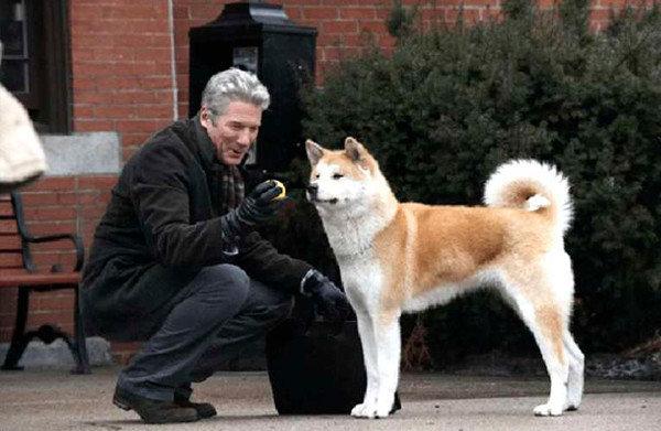 Легендарный Хатико акита-ину, иллюстрации, порода, собака, фото, япония