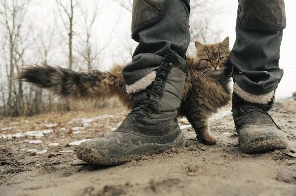 Собачий друг и «раздражитель» воронеж, дрессура, кот, собака