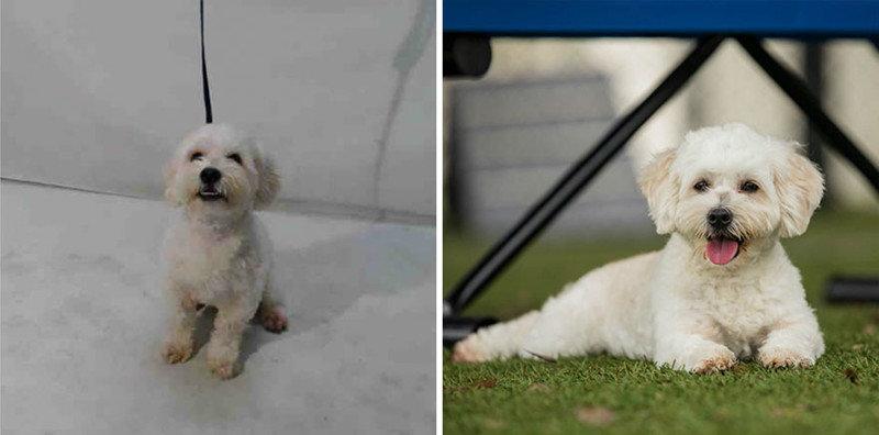 Как много значит хороший фотограф: 15 снимков животных из приюта до и после, домашние животные, животные, животные  фото, приют для животных, фотографии животных