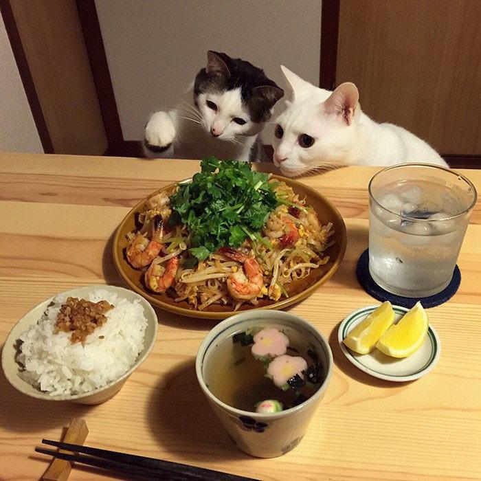 Ну дай вкусняшку, или как выпросить еду у хозяина! животные, кошки собаки клянчат вкусняшки, фото., юмор