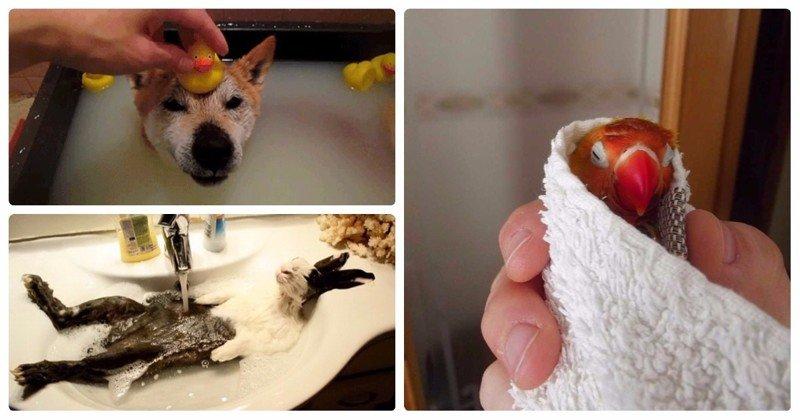 25 умилительных домашних животных, которые обожают принимать ванну ванна, вода, домашние питомцы, животные, милота, позитив