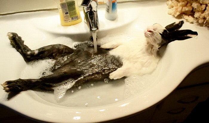 Кролик в экстазе ванна, вода, домашние питомцы, животные, милота, позитив