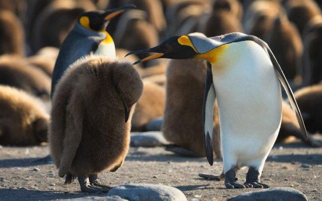 20 животных, которых можно только понять и простить  домашние животные, позитив