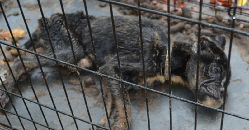 Все думали, что эта собака умрет, но любовь одного человека спасла ее животные, собаки, спасение, счастливый конец