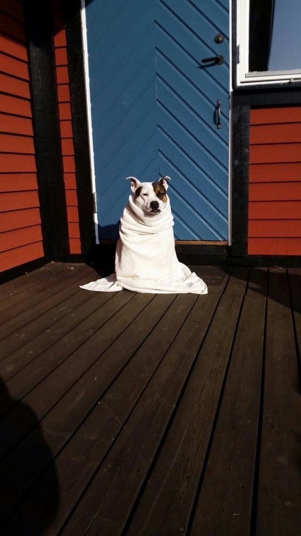 Собачья гидрофобия: 15 собак, которые до жути боятся воды боязнь, вода, собаки