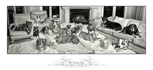 """""""Семейство Вуди"""" домашние любимцы, домашний зоопарк, животные, забавно, отзывы владельцев, поучительно, сколько животных держать, четвероногие питомцы"""