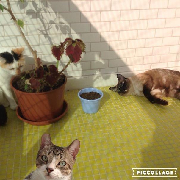 """""""У моего третьего кота проблемы с лапами, он плохо ходит, поэтому я просто вмонтировал его в снимок"""" домашние любимцы, домашний зоопарк, животные, забавно, отзывы владельцев, поучительно, сколько животных держать, четвероногие питомцы"""