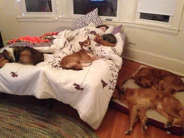 """""""Наши звери любят поспать с моей подругой"""" домашние любимцы, домашний зоопарк, животные, забавно, отзывы владельцев, поучительно, сколько животных держать, четвероногие питомцы"""