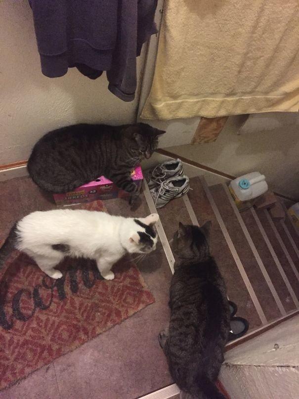 """""""Эта троица неизменно ждет меня на лестнице"""" домашние любимцы, домашний зоопарк, животные, забавно, отзывы владельцев, поучительно, сколько животных держать, четвероногие питомцы"""