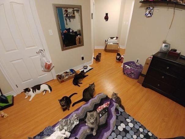 """""""Это еще не все мои кошки!"""" домашние любимцы, домашний зоопарк, животные, забавно, отзывы владельцев, поучительно, сколько животных держать, четвероногие питомцы"""