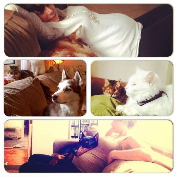 """""""Две кошки, две собаки, две черепахи... а через четыре месяца прибавился и один Homo Sapiens@ домашние любимцы, домашний зоопарк, животные, забавно, отзывы владельцев, поучительно, сколько животных держать, четвероногие питомцы"""