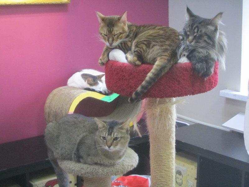 И у котиков есть своя республика друзья, животные, кошки