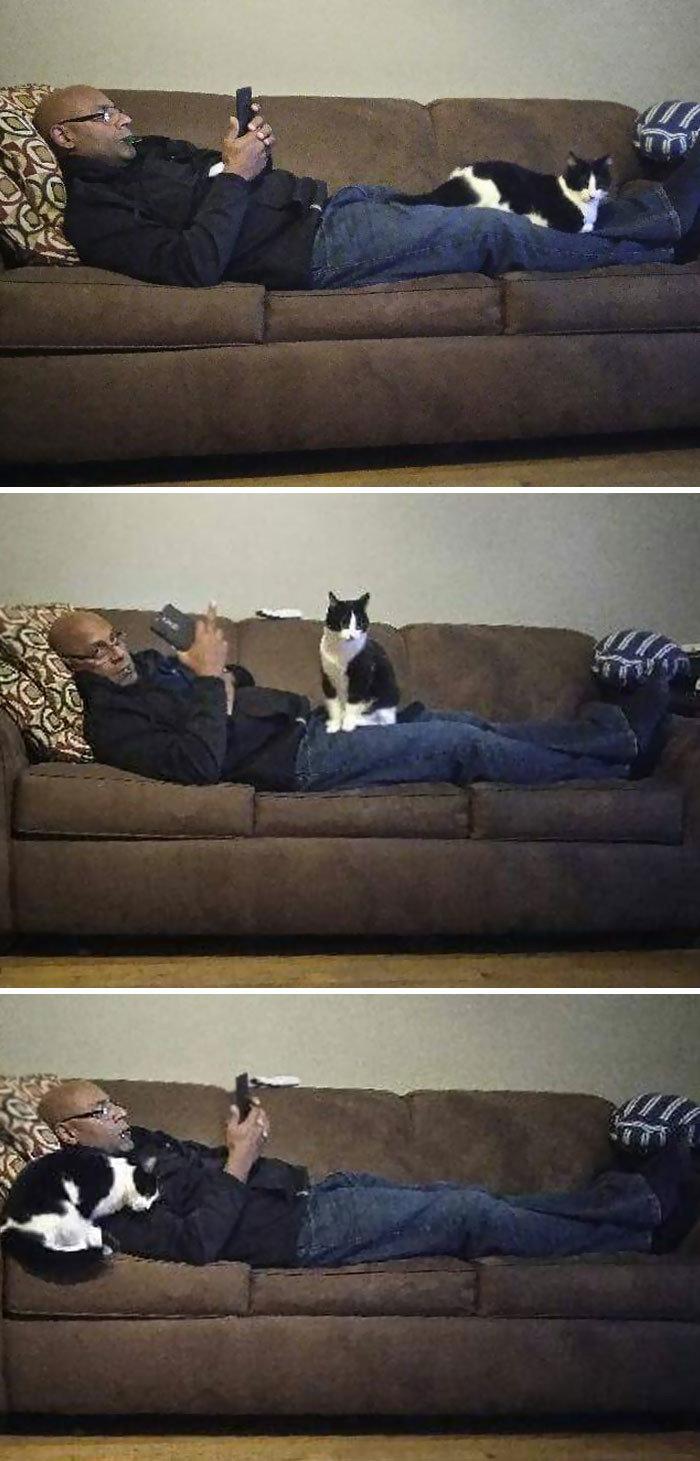 """""""Наша кошка любит только моего отца, который говорит, что ее ненавидит"""" животные, забавно, кошки, любовь к животным, обаяние, смешно, фото, эти забавные животные"""