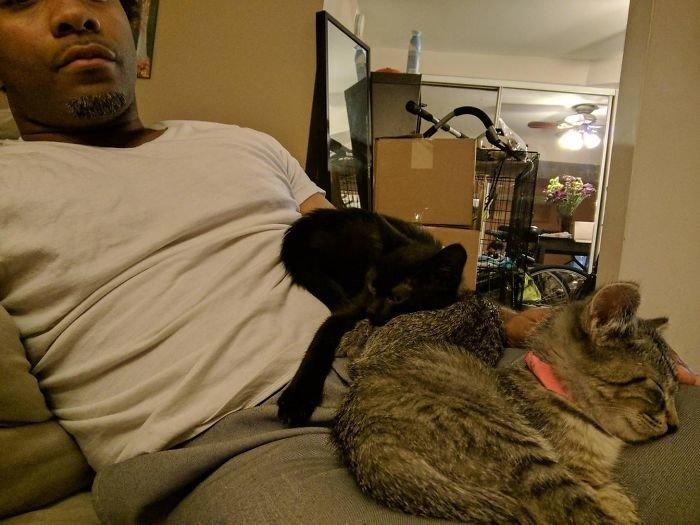 """""""Год нзад я говорил, что ненавижу кошек. Сейчас у меня уже четвертая партия на передержке"""" животные, забавно, кошки, любовь к животным, обаяние, смешно, фото, эти забавные животные"""