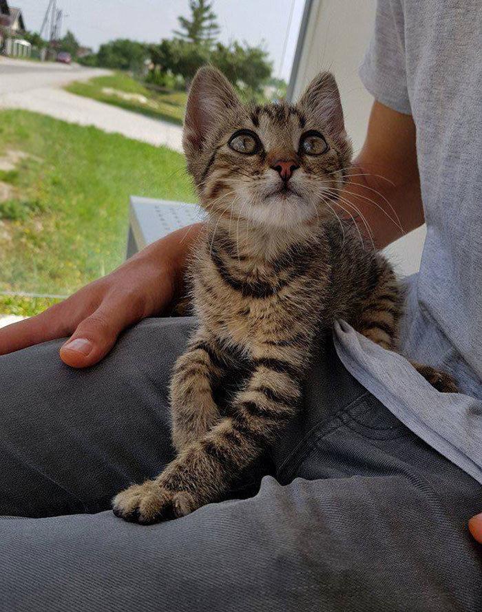 """""""Я подобрал кота. Вообще-то я не люблю кошек. Но вот, завелся как-то"""" животные, забавно, кошки, любовь к животным, обаяние, смешно, фото, эти забавные животные"""