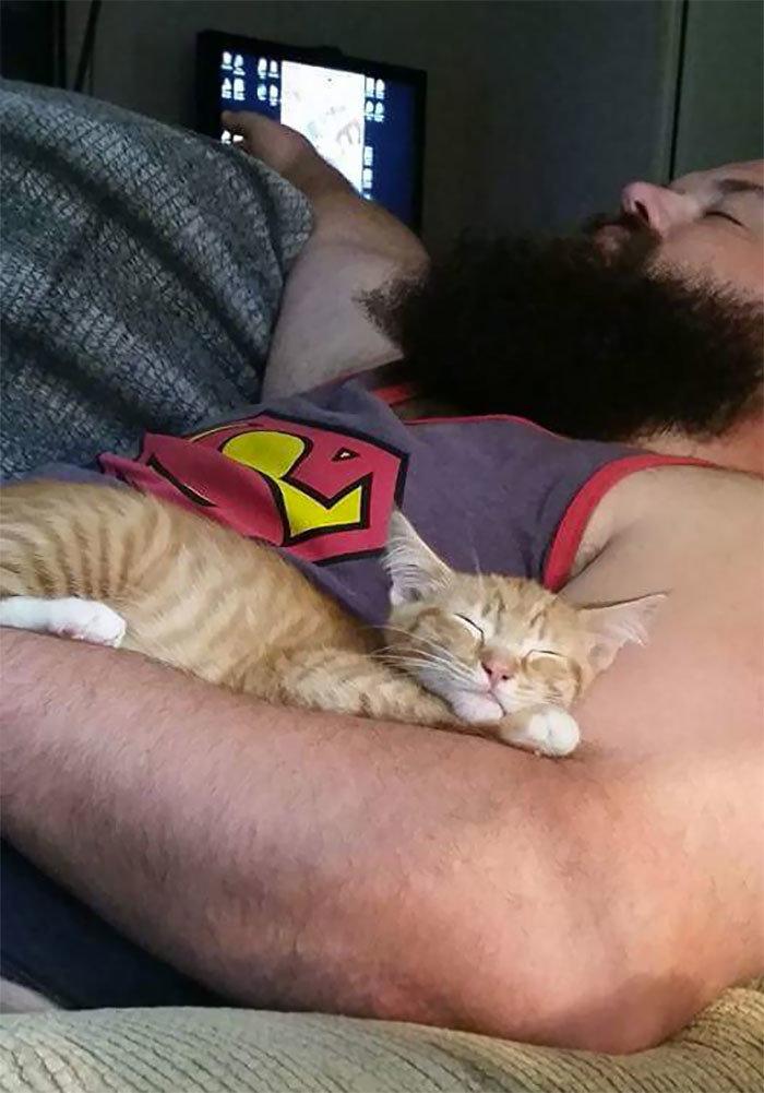 """""""Он не хотел кошку"""" животные, забавно, кошки, любовь к животным, обаяние, смешно, фото, эти забавные животные"""