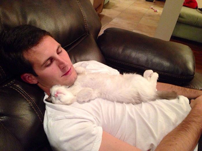 """""""Мой бойфренд говорит, что не любит кошек. Думаю, он врет"""" животные, забавно, кошки, любовь к животным, обаяние, смешно, фото, эти забавные животные"""