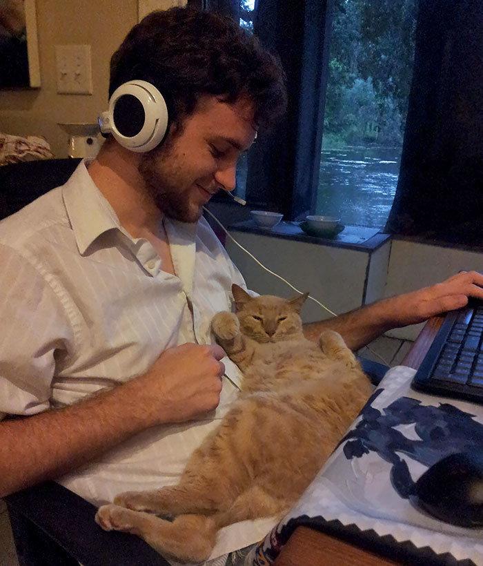 """""""Мой бойфренд говорит, что не любит кошек"""" животные, забавно, кошки, любовь к животным, обаяние, смешно, фото, эти забавные животные"""