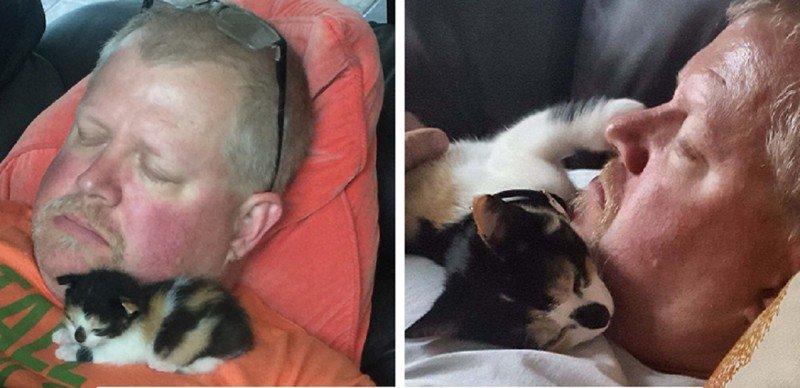 Эти люди говорили, что не любят кошек, - и чем все закончилось? животные, забавно, кошки, любовь к животным, обаяние, смешно, фото, эти забавные животные