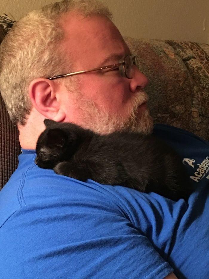 """""""Мой папа не любит кошек"""" животные, забавно, кошки, любовь к животным, обаяние, смешно, фото, эти забавные животные"""