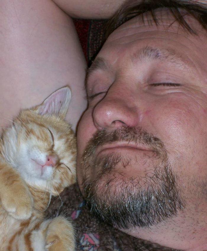 """""""Мой отец утверждает, что ненавидит кошек"""" животные, забавно, кошки, любовь к животным, обаяние, смешно, фото, эти забавные животные"""