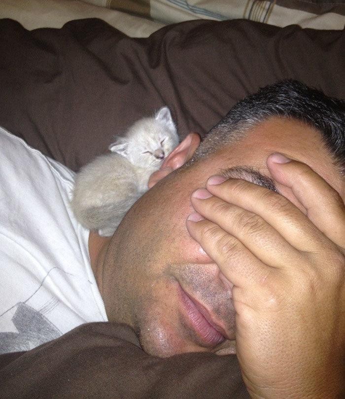 """""""Папа не хотел котенка, но котенок явно хочет папу"""" животные, забавно, кошки, любовь к животным, обаяние, смешно, фото, эти забавные животные"""