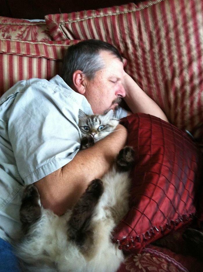 """""""Мой отец говорит, что не любит кошек, но посмотрите на него!"""" животные, забавно, кошки, любовь к животным, обаяние, смешно, фото, эти забавные животные"""