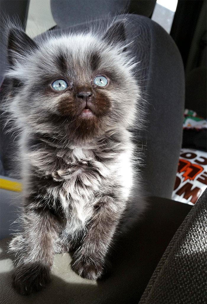 """""""Я не любитель кошек. Но не взять ее я просто не смог"""" животные, забавно, кошки, любовь к животным, обаяние, смешно, фото, эти забавные животные"""
