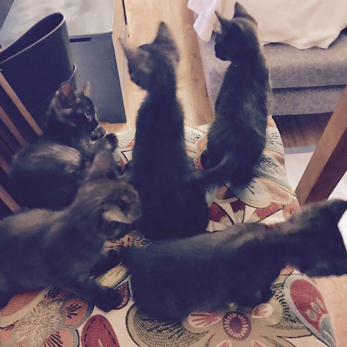 """""""Я не хотел заводить кошку, а жена хотела. Поэтому мы пошли на компромисс и завели пять кошек"""" животные, забавно, кошки, любовь к животным, обаяние, смешно, фото, эти забавные животные"""