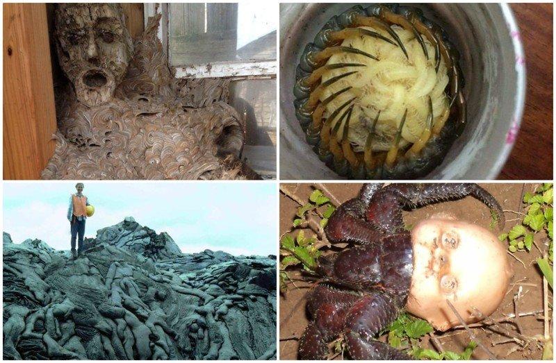 Природа - жуткая и пугающая: 25 шокирующих фото жуткие фото, насекомые, неожиданно, подборка, природа, ужас, фото, что творится