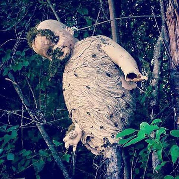 Осиное гнездо из брошенной детской куклы жуткие фото, насекомые, неожиданно, подборка, природа, ужас, фото, что творится