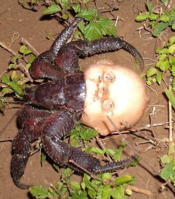 """Это не паук из """"Ночного дозора"""", а крабик жуткие фото, насекомые, неожиданно, подборка, природа, ужас, фото, что творится"""