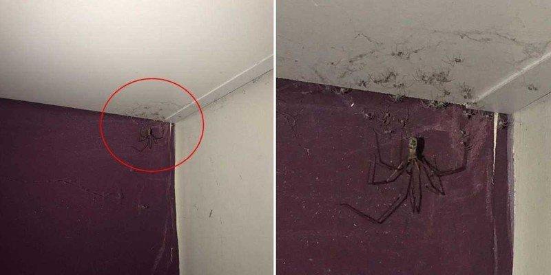Девушка хотела убрать «паутину» в спальне, но увиденное оказалось её худшим кошмаром насекомые, паук, паутина, пыль. уборка, страх, ужас