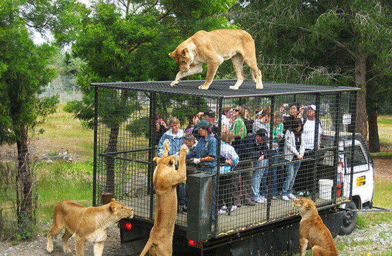 Эти прикольные обитатели зоопарков животные, зоопарк, зоосафари, прикол