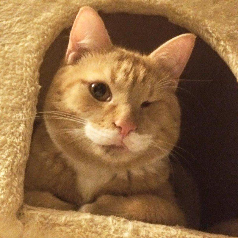 Одноглазому и неуклюжему коту приходилось выживать на улице… животные, кошки, хэппи энд