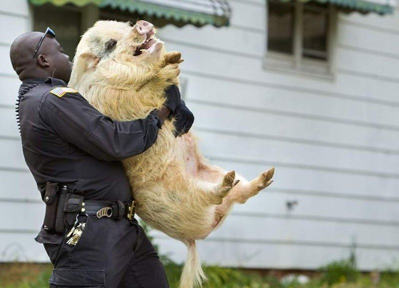 Преступники животного мира животные, криминал, фото