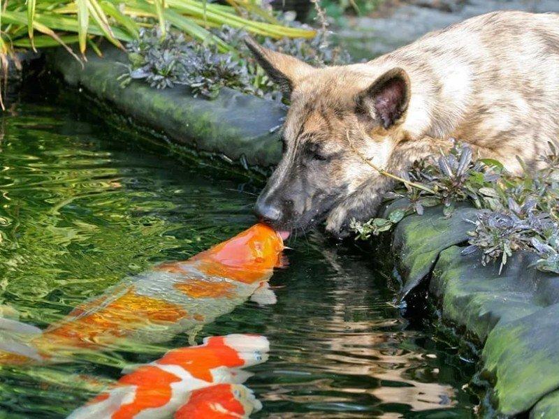 Необычные фото животных животные, природа., фото