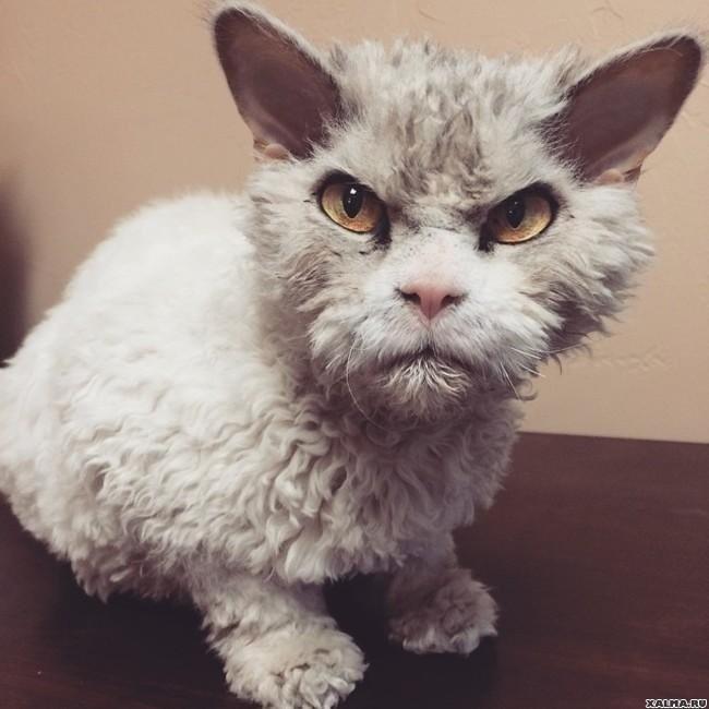 Самые сердитые животные в мире… на которых невозможно смотреть без улыбки животные, милота., фото, юмор