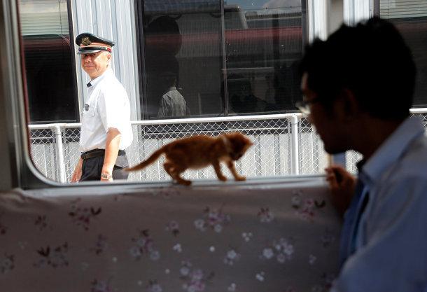Это интересно. Котопоезд в Японии истории, кошки, факты, япония