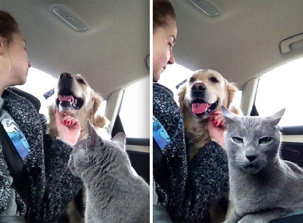 """""""Мой кот не одобряет любовь между собакой и человеком"""" дружба животных, животные, забавные животные, как кошка с собакой, кошки, собаки, фото, юмор"""