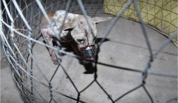 Пес Лаки испытал жуткое обращение, пока его не спасли добрые люди собаки, спасение, хэппи энд