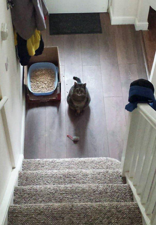"""""""Мой кот Генри каждое утро приносит мне свою игрушечную мышь, заявляя об успешной охоте в ночное время"""" вещи. милота, домашний питомец, животные, кошка, подарки, собака"""